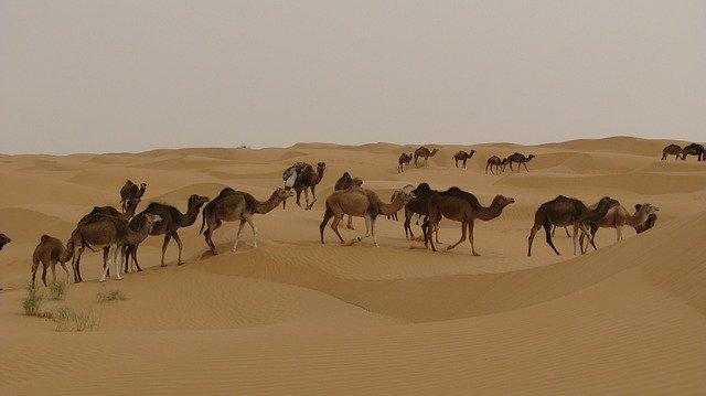 Douceur de vivre Djerba